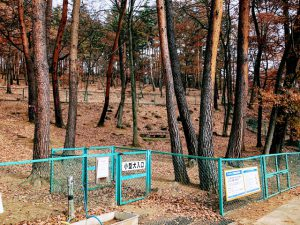 佐久市 平尾山公園ドッグラン 小型犬用